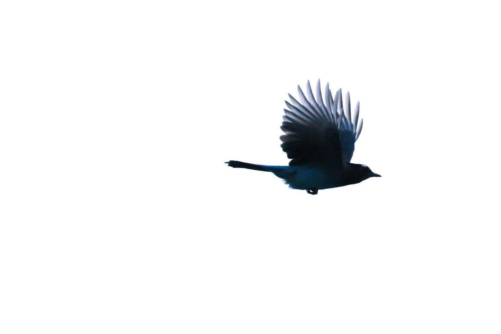 repülő madár